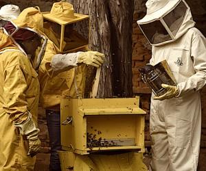 Nuovo apiario a Milano