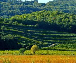 L'ulivo, la vite e il vento: l'affascinante ristoro dei Colli Berici