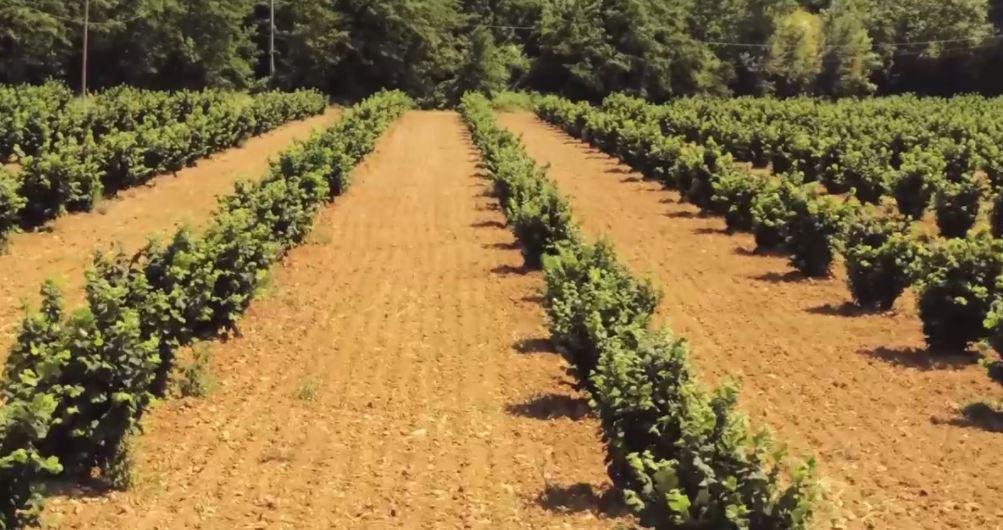 Una filiera del nocciolo in Umbria che guarda al futuro tra riconversione, sostenibilità e redditività per il comparto agricolo