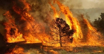 Incendi e alluvioni: le responsabilità dell'uomo